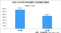 """四川擦亮""""川猪""""金字招牌 2020上半年四川生猪出栏量全国第一(附数据图)"""