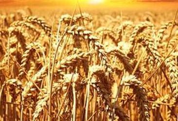 首个智慧农业示范基地建设项目落户上杭 我国智慧农业有何发展目标?(附产业链图)