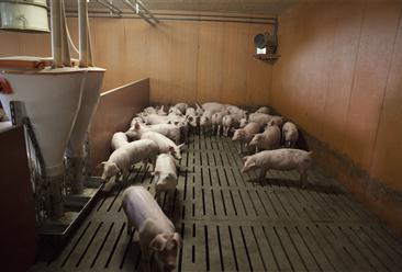 六盘水市水城区生猪标准化规模养殖项目招商