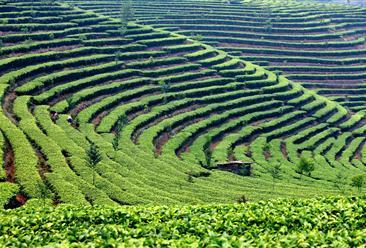 黔西南州贞丰县高标准茶叶加工种植项目招商