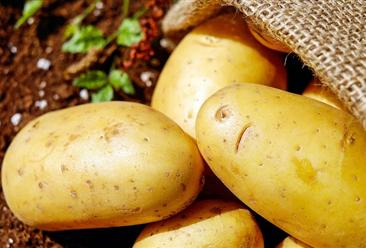 2020年8月国内马铃薯市场价格及供需形势预测:薯价下跌可能性较大