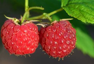 2020年8月水果市场供需形势及后市预测:后期水果价格继续回落