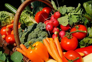 2020年8月蔬菜市场供需形势及价格预测:菜价格保持季节性下行