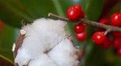 2020年1-8月中国棉花进口数据统计分析