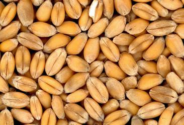 2021年2月小麦市场价格及供需形势分析:国际小麦价格高位震荡