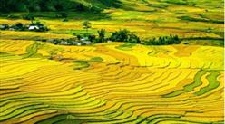 """探索农业区域一体化发展新模式  长三角地区""""十四五""""农业发展思路分析(图)"""
