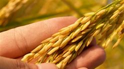2021年3月小麦市场供需形势及价格走势预测:小麦价格稳中略跌