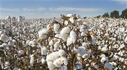 中国棉花产量及进口情况分析:新疆棉花产量占全国87.3%(图)