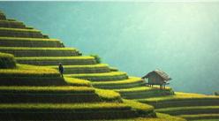 2021年中国数字乡村行业市场前景及投资研究报告(简版)