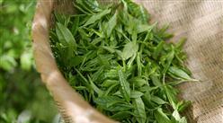 2021年中国茶产业市场现状分析:茶园种植面积增长3.26%