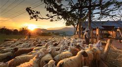 """全国各省市现代畜牧业产业""""十四五""""发展思路汇总分析(图)"""