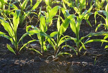 全國各省市土壤修復行業