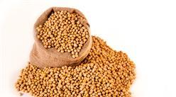 2021年6月大豆市场供需及价格走势预测分析:国内大豆价格持平,国际价格明显上