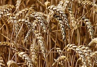 2021年全国各地区夏粮产量运行情况分析:河南夏粮产量最高