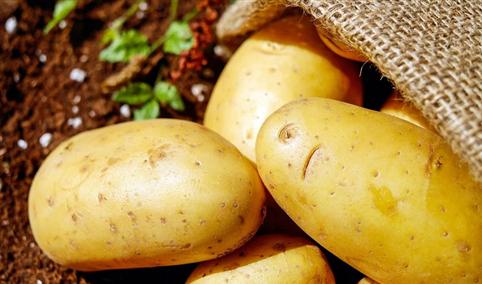 2021年7月马铃薯市场供需及价格走势预测分析:马铃薯价格同比明显下跌