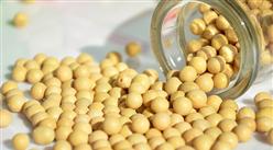 2021年8月大豆市场供需及价格走势预测分析:国内大豆价格持平,国际大豆价格下跌
