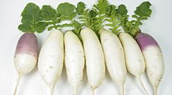 2020年8月17日安徽省白萝卜批发价格行情