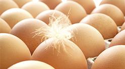 2021年2月14日天津市鲜鸡蛋批发价格行情