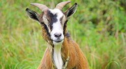 2020年11月26日四川省整羊批发价格行情